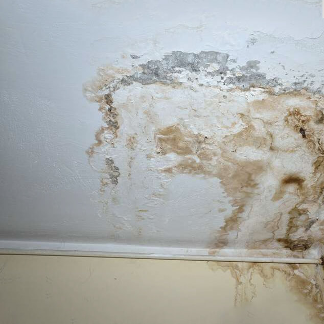 mold water damage assessment